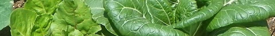 Argyle Produce